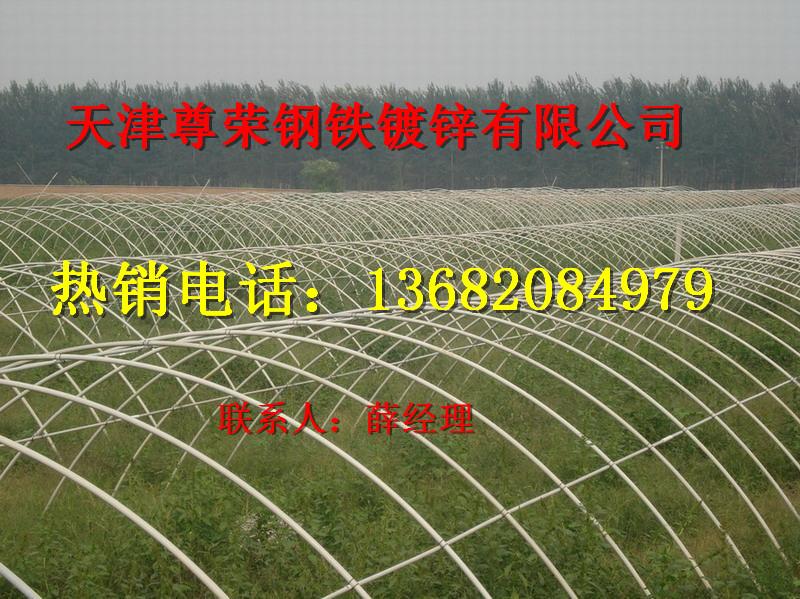天津大棚镀锌管库存价格表